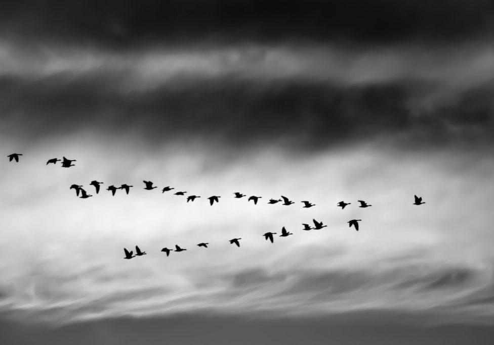 birds-ethan-weil-262745-unsplash